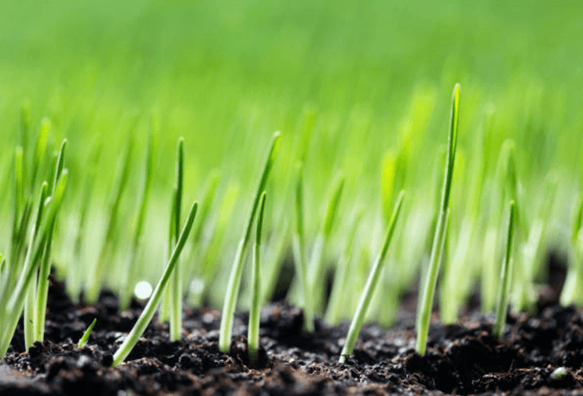 aerated soil